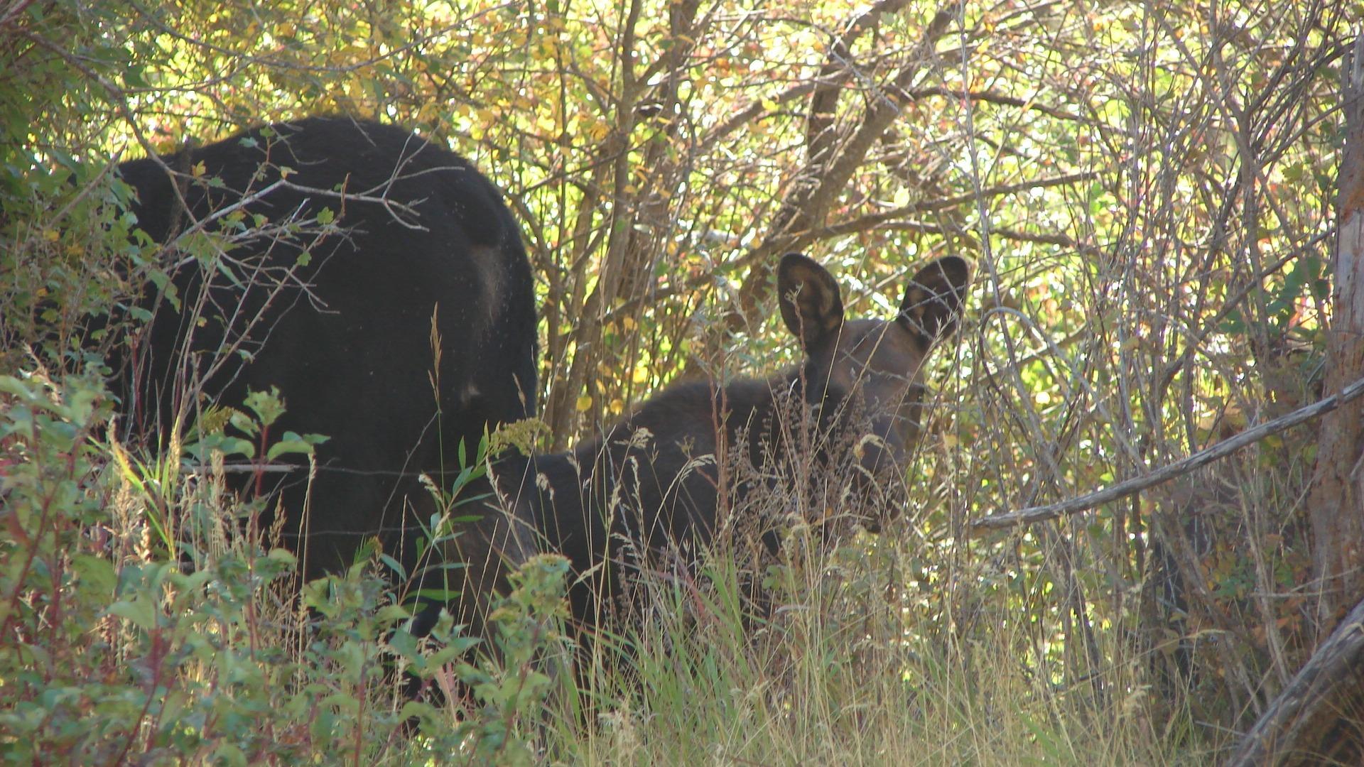 Wildlife Viewing Sleepy J Cabins