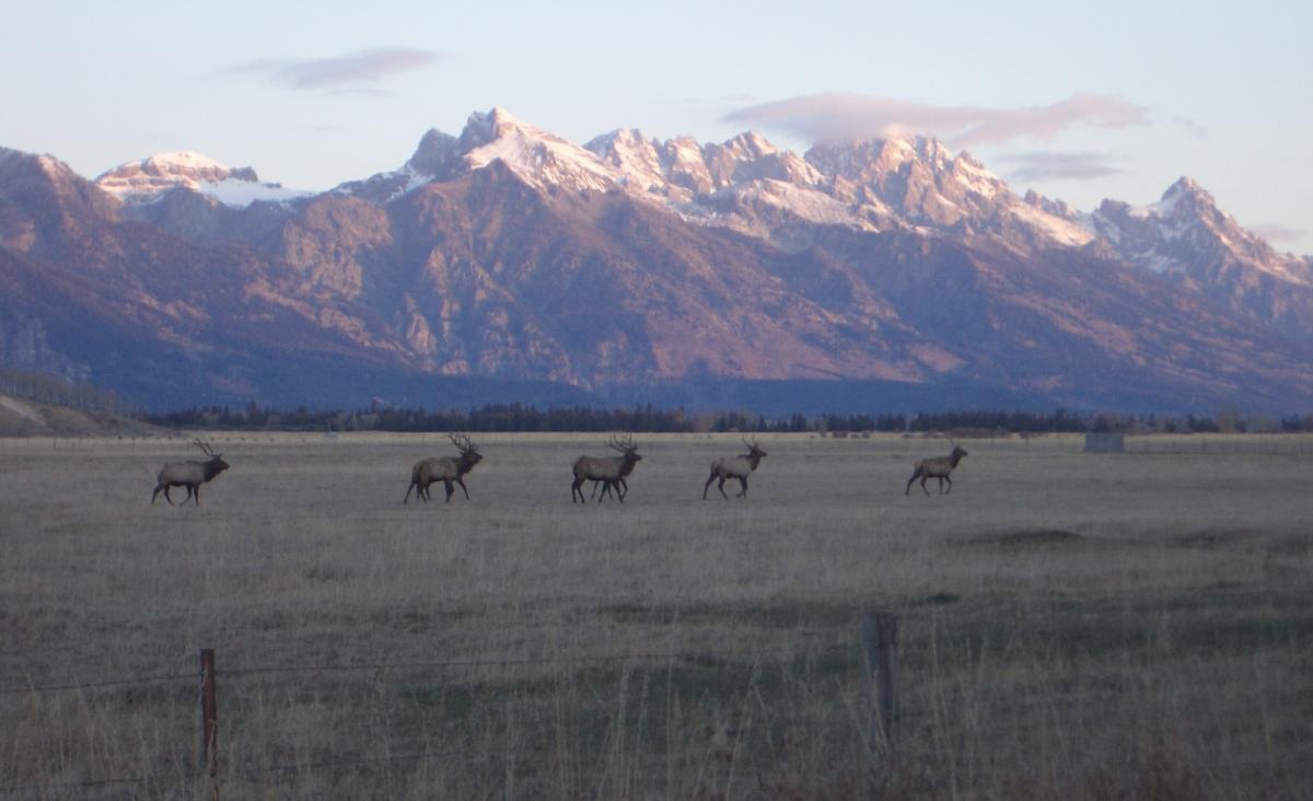 5 Bull Elk Crossing Pine Creek Bench