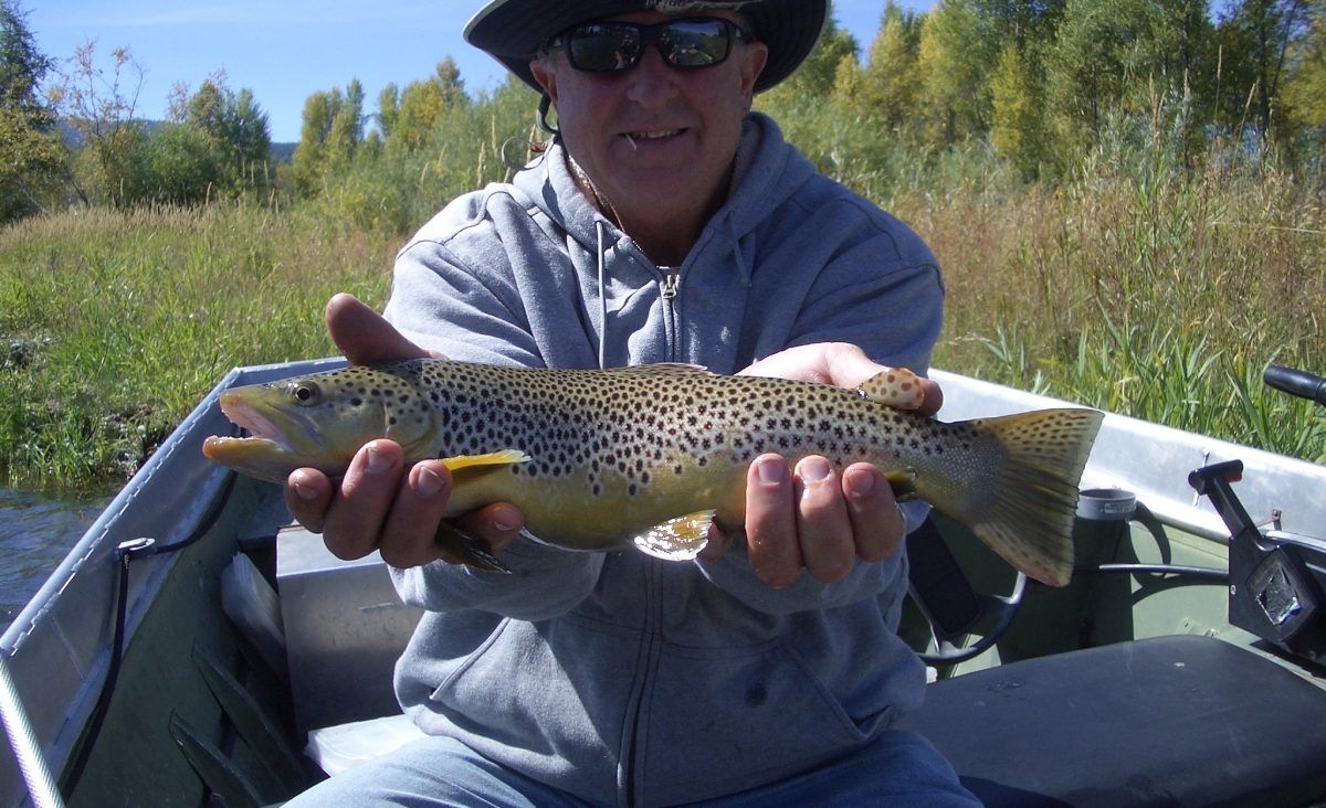 Jake's South Fork Brown Trout