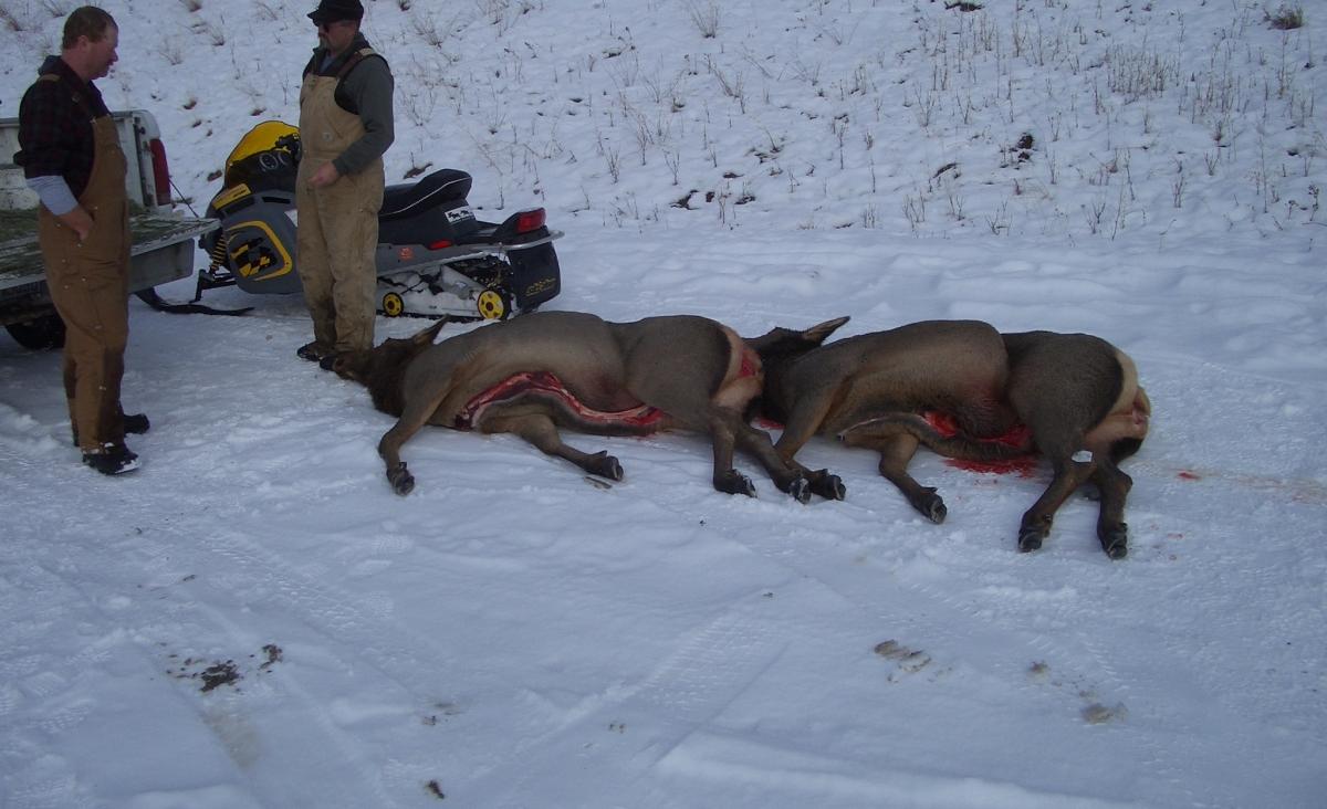 Swan Valley Elk Hunt