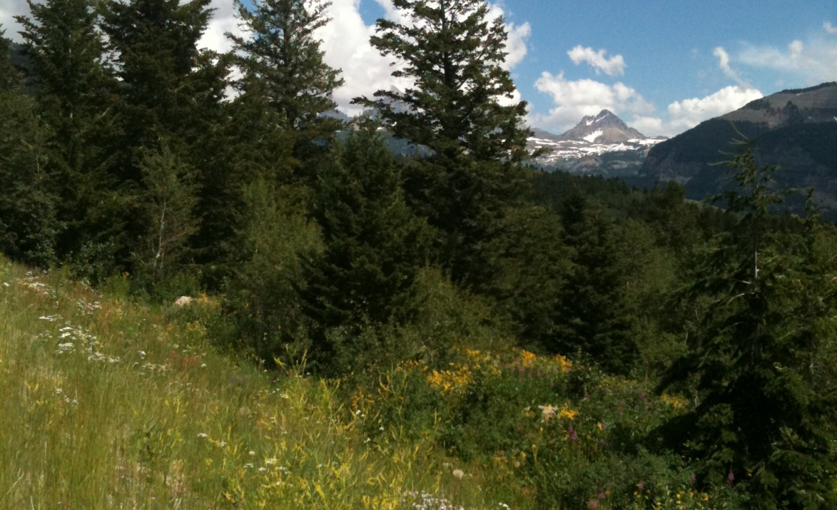 Swan Valley Wildflowers